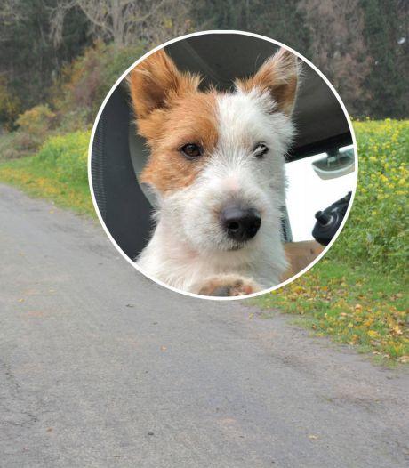Jogger steekt hondje dood voor ogen van zijn baasje: 'Dribbel deed geen vlieg kwaad'