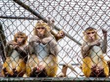 Rozen voor de apen in proefdierencentrum Rijswijk