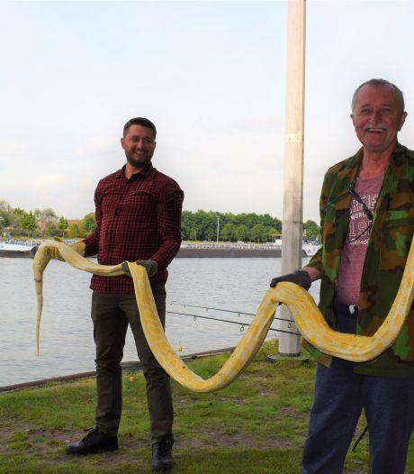 Vrienden vissen dode slang van vier meter uit kanaal Gent-Terneuzen: 'Zo'n grote 'paling' hebben we nog nooit boven gehaald'
