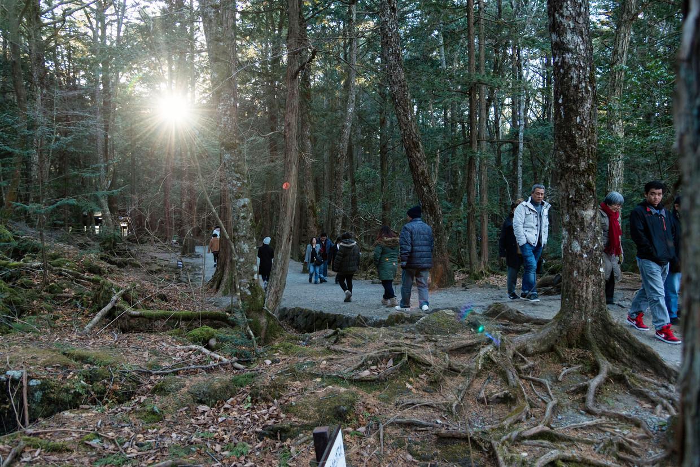 Wandelaars in het Aokigahara-bos aan de voet van Mount Fuji. Het woud heeft een etherische schoonheid maar ook een kwalijke reputatie.