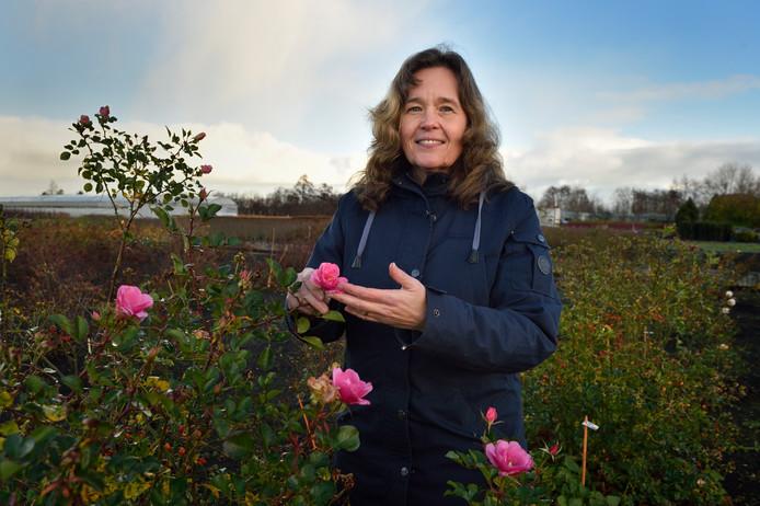 Veredelaar Margareth Hop in een proefveld met rozen.