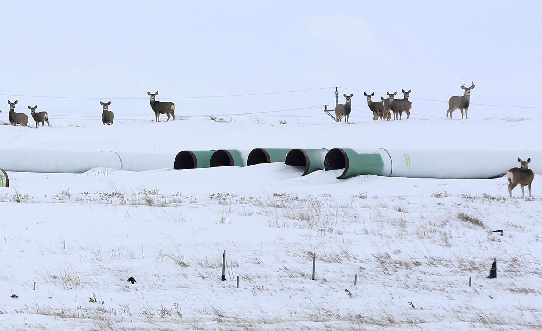 Buizen bedoeld voor de pijplijn in de Amerikaanse staat North Dakota in 2017.