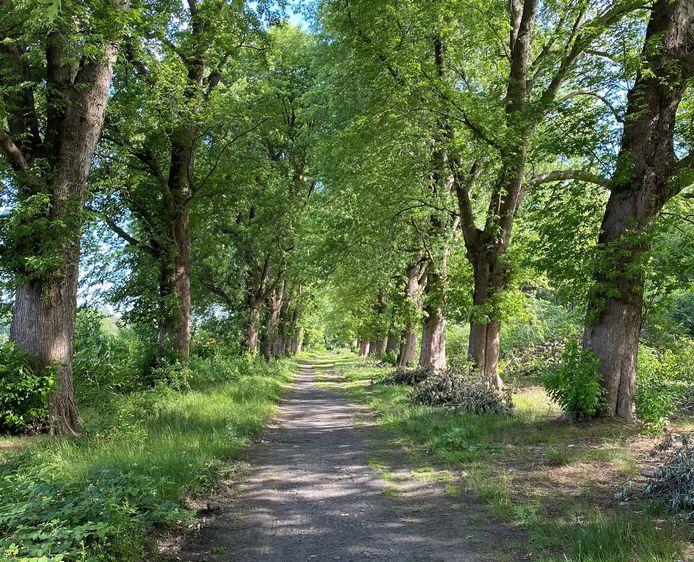 Het Soldatenbos in Kessel.