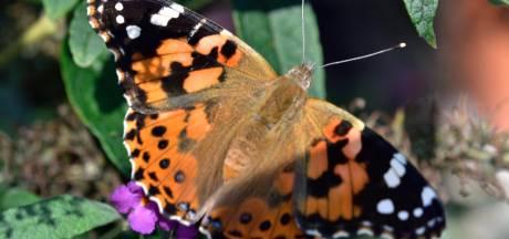 Les citoyens invités à compter les papillons pendant tout le mois de juillet