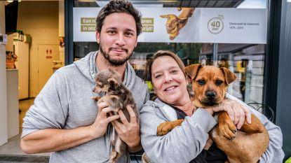 Dierenasiel viert 40ste verjaardag: 'Een hond kwispelend een nieuwe toekomst tegemoet zien gaan, daarvoor doen we het'