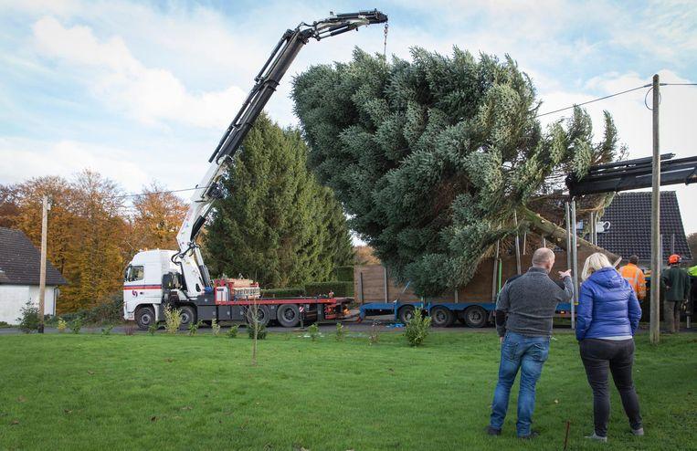 Terwijl die operatie gaande is, staat hij wat droevig bij het restant van zijn boom Beeld Dingena Mol