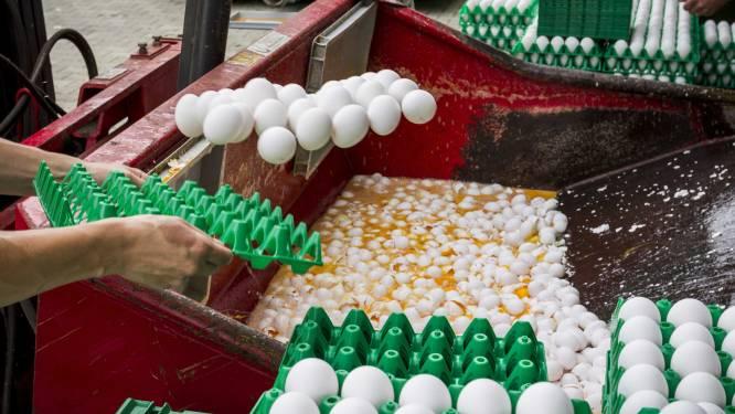 """Voedselagentschap belooft """"zeer binnenkort"""" globale resultaten van geteste eieren"""