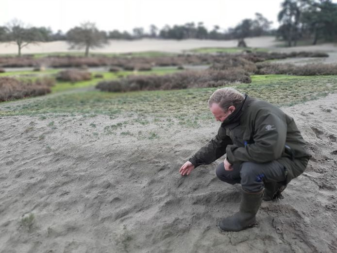 Lex Querelle wijst op een lichtgroene waas over het losse zand; de eerste fase van vermossing.