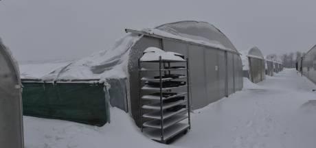 Tunnels kwekerij bezwijken onder vracht sneeuw: tonnen schade