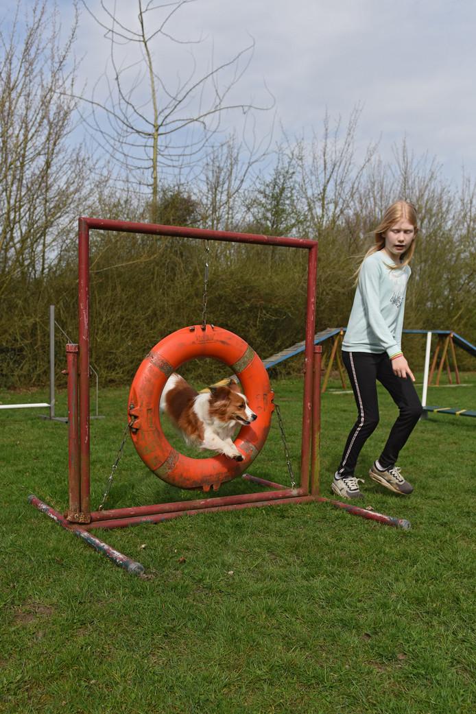 De 11-jarige Romee Donker leidt haar hondje Lucky over het trainingsparcours met hindernissen.