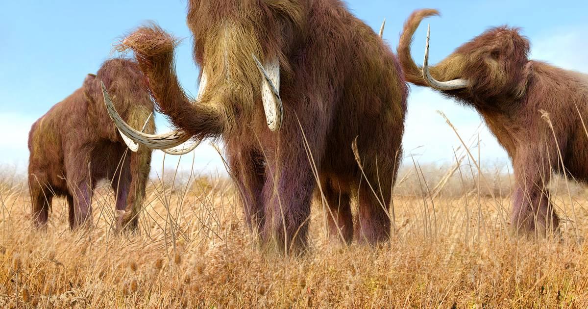 Le plus vieil ADN jamais daté provient d'un mammouth d'1,2 million d'années - 7sur7