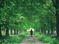 Un tiers des espèces d'arbres est menacé