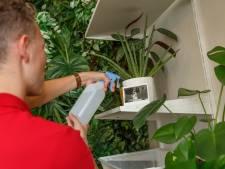 Vakantie-opvang voor kamerplanten op Grote Markt in Breda: voetenbadjes en verkoelende spray