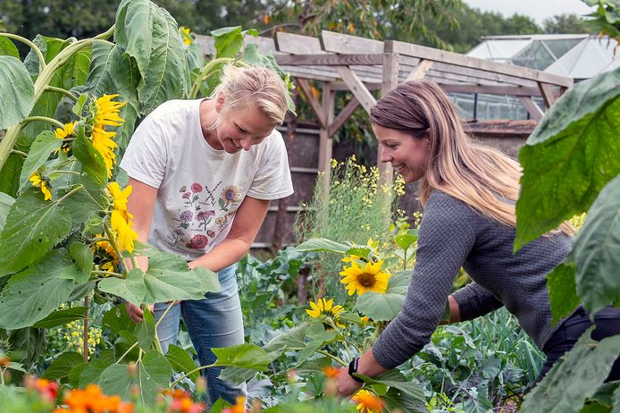 Stadsboerderij de Kleine Kievit timmert aan de weg. Bezoekers kunnen er zelf bloemen en groenten plukken.