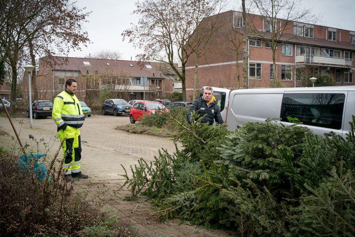 Stapel kerstbomen bij de inzamelplek bij de Vredehorst aan de Tarthorst.