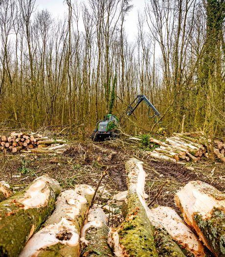 Wethouder reageert op omstreden bomenkap: 'Tijdens inspectieronde viel er al een boom om'