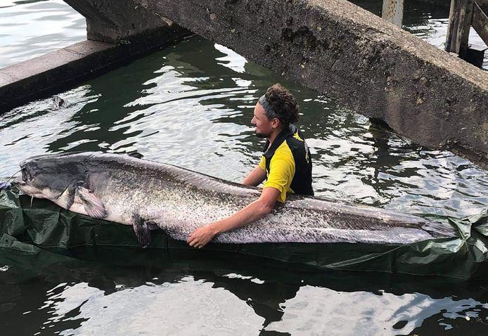 Visser haalt meerval van 2,43 meter en 90 kilo uit Seine nabij Parijs.