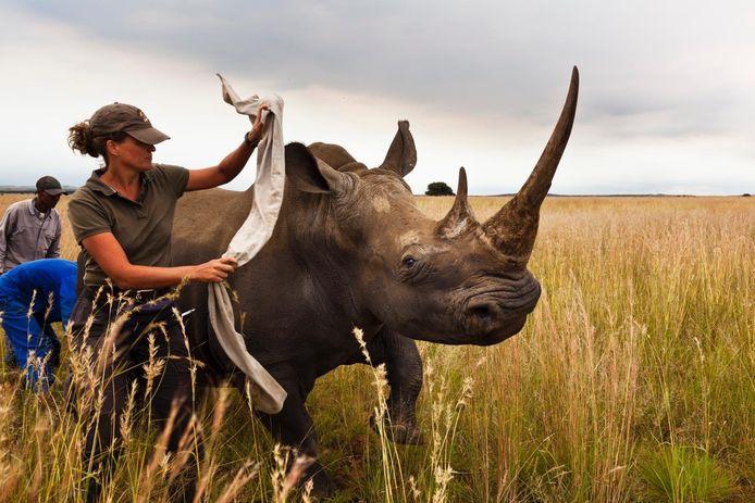 In Zuid-Afrika bestaan meerdere initiatieven om neushoorns te redden uit de handen van stropers.