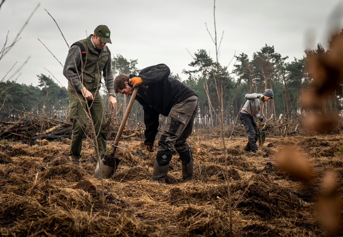 Erik Schram (links) en Anton Vos (daarnaast) planten een boom in Maarheeze, op een perceel dat twee jaar geleden afbrandde.