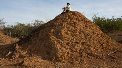 Gigantische termietenstad ontdekt die zo oud is als piramiden van Cheops en zo groot als Groot-Brittannië
