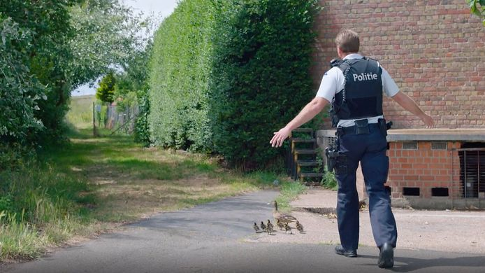 De Oostendse politie probeert de eendjes van de rijweg te halen