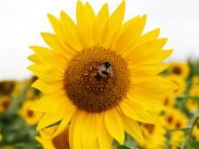 'Helemaal gifvrije planten in het tuincentrum is een utopie'