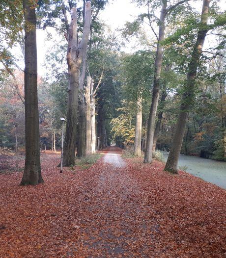 Bloemrijke bermen om te parkeren, geen trottoirs, luxe bestrating en veel groen: wijkje De Velden op Steenenburg