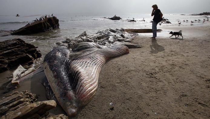 De rottende walvis.