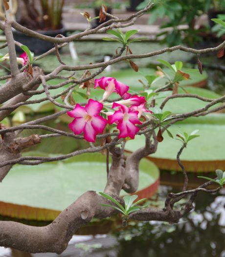 Een wandeling door een botanische tuin is een kijkje in het paradijs