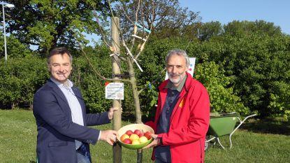 Radio 2-appelboom fleurt 'Klein Rome' op