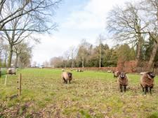 Dalfsen schiet woningbouwplan Nieuwleusen af, tot afgrijzen van architect