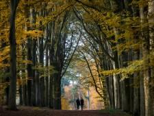 Natuurgraven in bossen Rhenen van Prattenburg