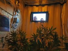 Meldbox veiligheid in Rijen, primeur, met wietkwekerijtje