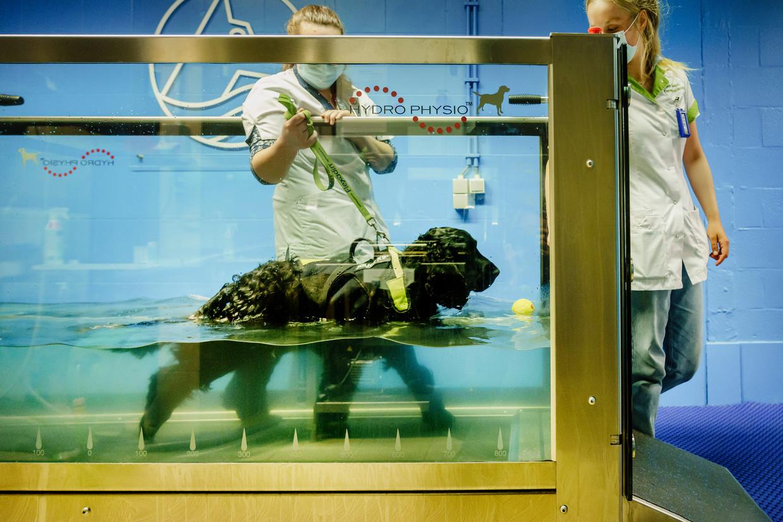 Elliot ondergaat hydrotherapie aan de UGent. Beeld © Eric de Mildt