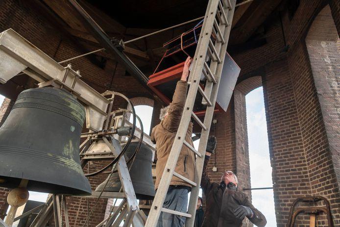 Toeren uithalen in de klokkentoren van Broekhoven voor de slechtvalken en hun nageslacht.