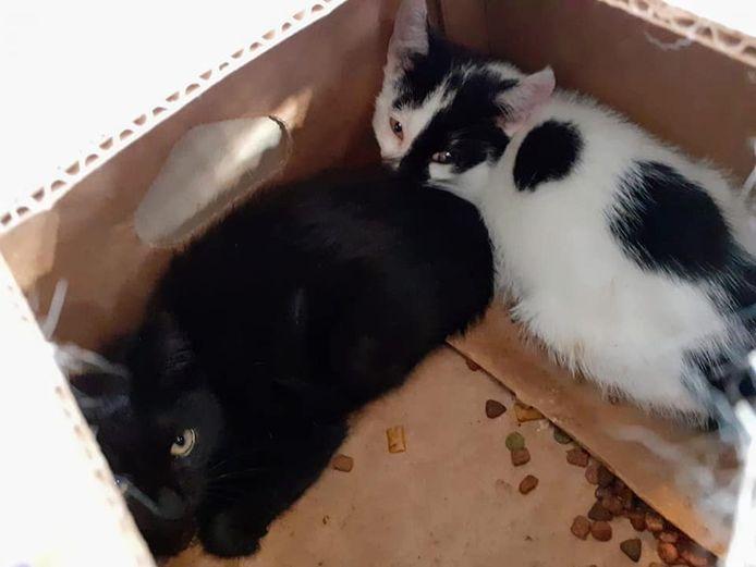 Twee van de gedumpte kittens.