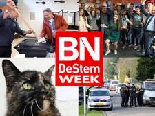 West-Brabantse week: katten bruut vermoord in Bergen op Zoom en ook West-Brabant stemt VVD