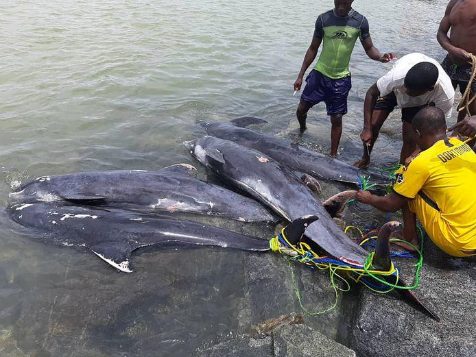 Enkele inwoners bekijken de dolfijnkarkassen.