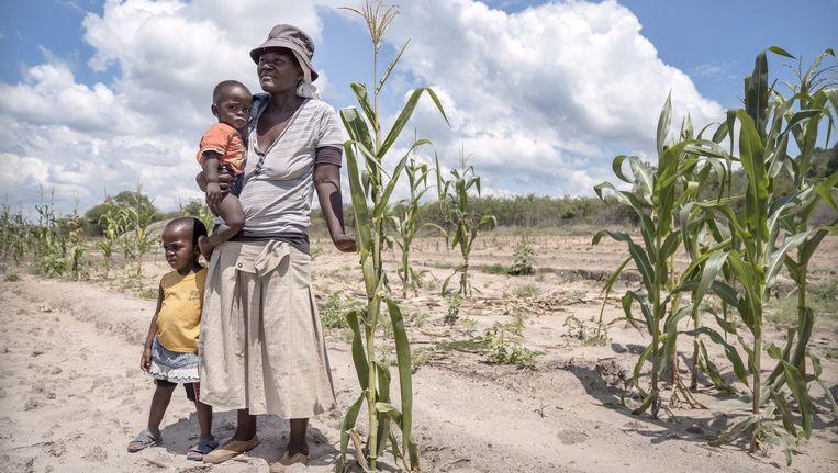 Sepho Thebe en haar twee kinderen op haar verdorde maïsveld. Beeld Sven Torfinn