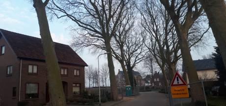 Bomen Korte Loostraat in Huissen moeten toch wijken voor appartementencomplex