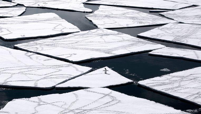 Een pinguïn op een ijsschots in de Rosszee. Beeld AFP