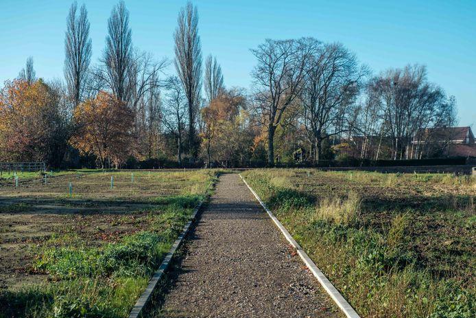 Het Vlonderpad aan het wachtbekken in de Schanslaan in Borsbeek.