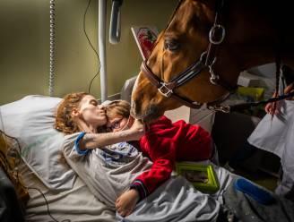 """Dit paard troost kankerpatiënten in ziekenhuis van Calais: """"Hij blijft soms bij hen tot op het einde"""""""