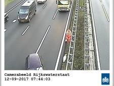 Zwaan maakt A28 tussen Amersfoort en Utrecht onveilig