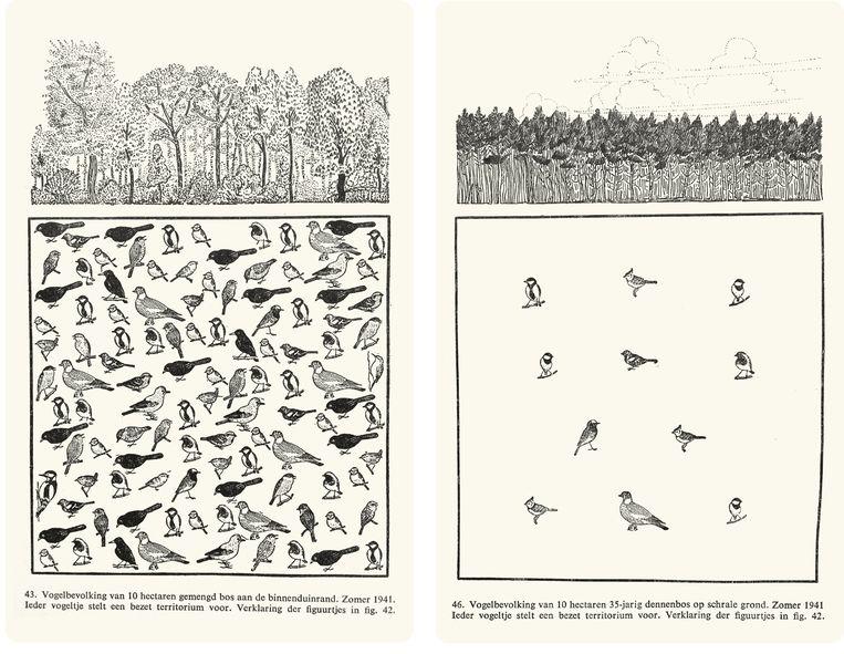 Twee van de beroemde illustaties uit Luuk Tinbergens 'Volgens in hun domein' uit 1941. Het gemengde bos in de binnenduinrand herbergt een rijke vogelbevolking, zowel in variatie als in aantallen. Het 35 jaar oude dennenbos is daarentegen relatief arm aan vogels.  Beeld