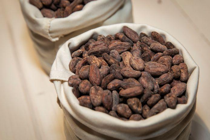 Verwerkte cacaobonen.