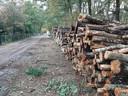 Dit waren ooit fijnsparren die in het Brestbosch stonden.