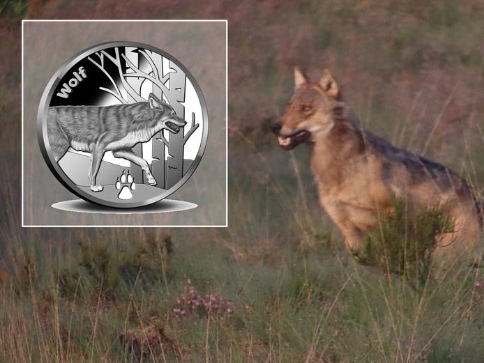 Benny Pieters uit Epe fotografeerde een jagende wolf op de Veluwe. Inzet: De 'wolvenmunt' van De Koninklijke Nederlandse Munt