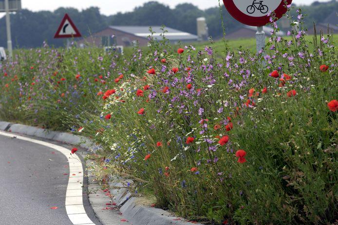 Bermen met wilde bloemen (ter illustratie). Dalfsen wil een natuurlijker beheer van het openbaar groen om de biodiversiteit te bevorderen.
