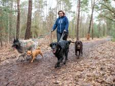 Aantal hondenuitlaatservices groeit veel harder dan aantal honden